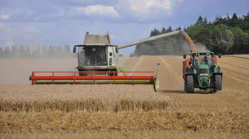 Can Production Cuts Stop Plummeting Wheat Prices?