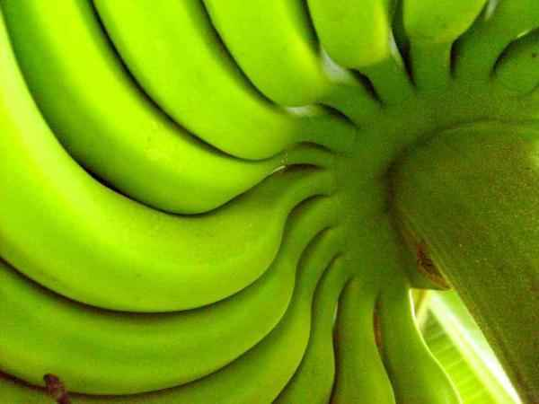 Green Banana Flour Could Be the Key to a Healthier Gluten-Free Future